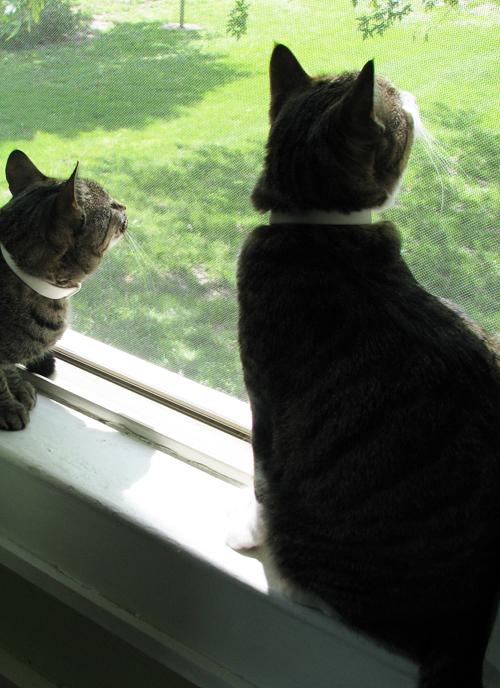 Both_kittys