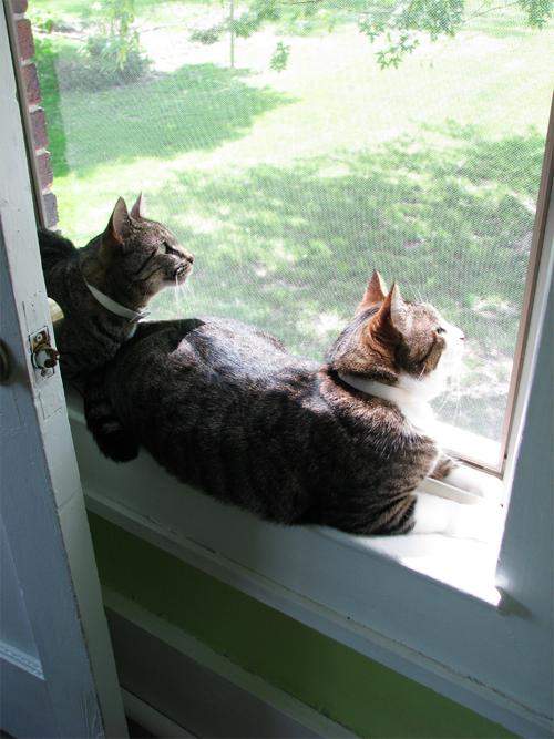 Two_kitties_down_2